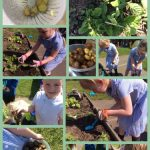 Gardening in Reception